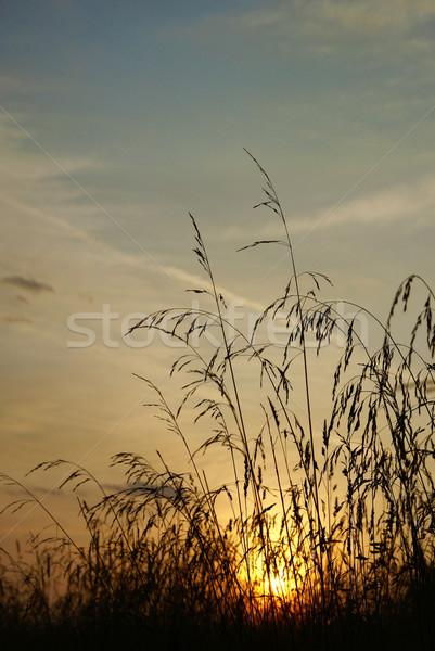 Zonsondergang planten stralen zon hemel Stockfoto © Pozn