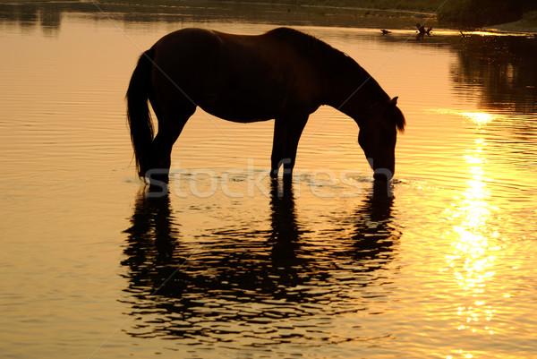Paard plaats dranken water strand Stockfoto © Pozn
