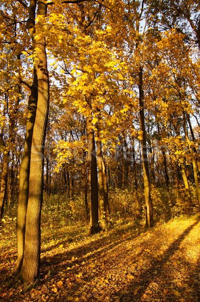 Laatste najaar bos hout natuur licht Stockfoto © Pozn