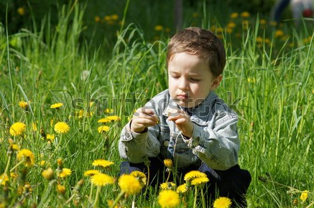 Boy collects spring flowers Stock photo © Pozn