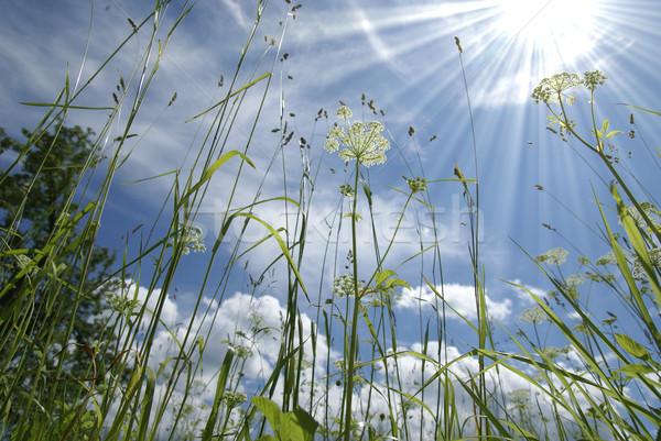 Gras tuin zon stralen hemel boom Stockfoto © Pozn