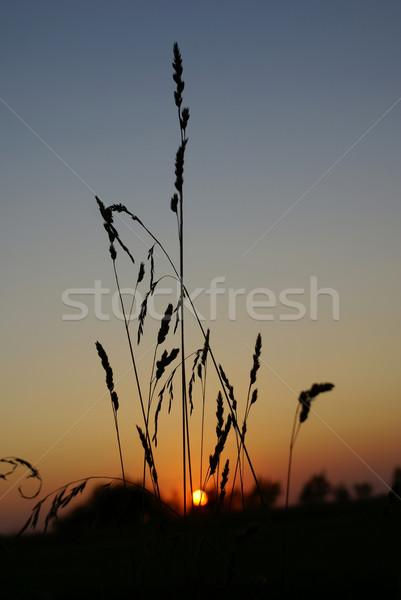 Zonsondergang gras laatste hemel landschap blad Stockfoto © Pozn
