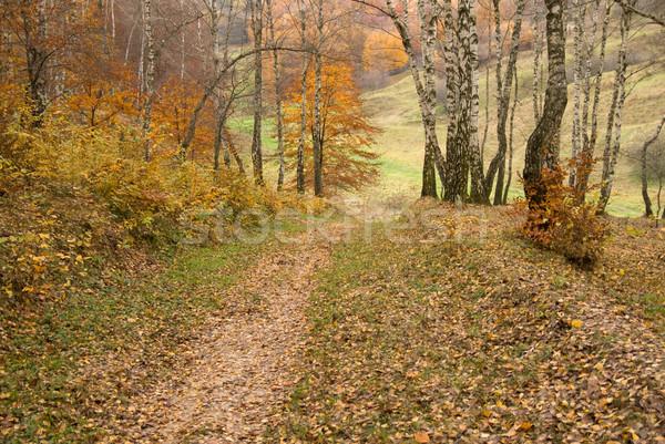Laat najaar laatste boom natuur wereld Stockfoto © Pozn