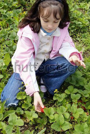 Collectie aardbeien mooi meisje rijp gezicht natuur Stockfoto © Pozn