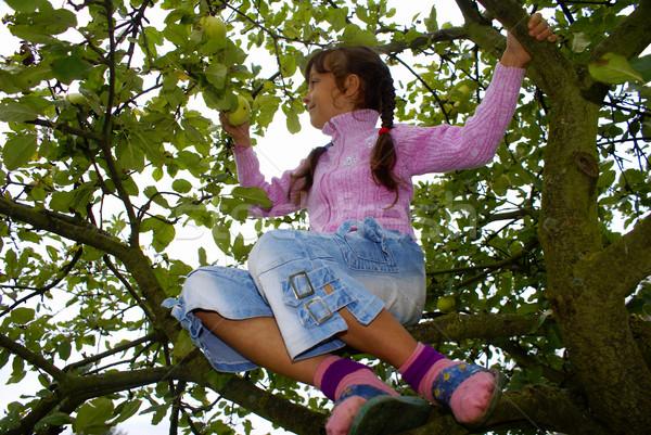 Gewas appels meisje hemel natuur vruchten Stockfoto © Pozn