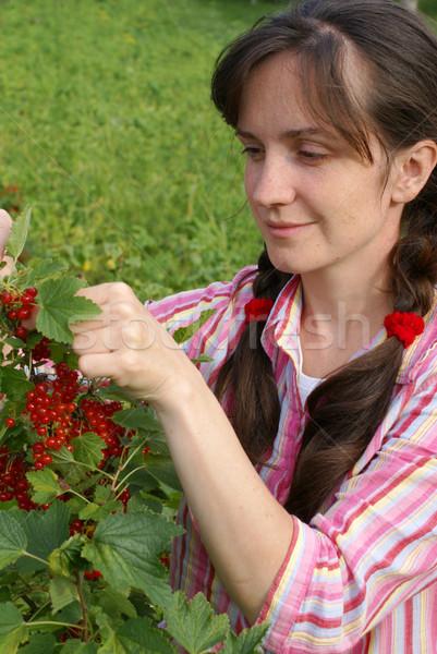 Oogst Rood bes meisje vrouw voedsel Stockfoto © Pozn