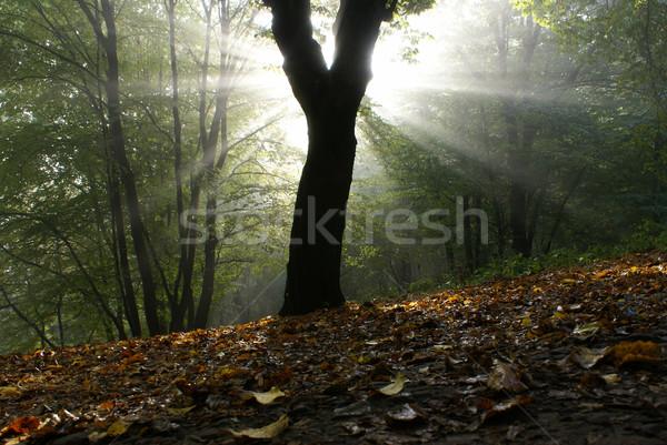 Mistig ochtend zonne manier mist Stockfoto © Pozn