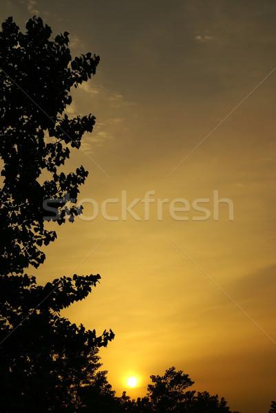 Zonsopgang bladeren bomen zon voorjaar Stockfoto © Pozn