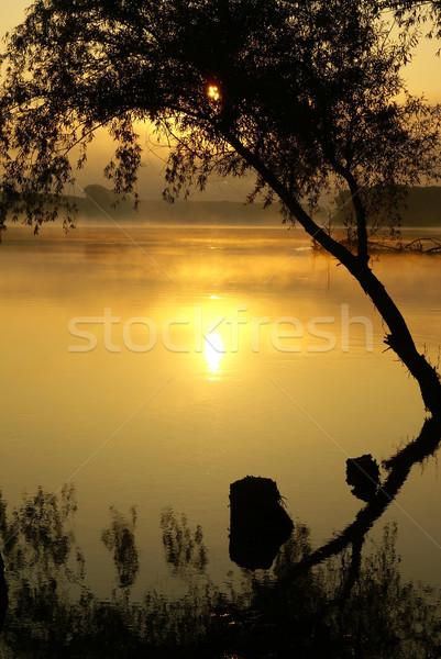Dawn donau rivier boom voorjaar zonsondergang Stockfoto © Pozn