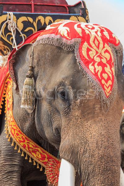 Taylandlı fil göstermek Tayland arka plan bayrak Stok fotoğraf © prajit48