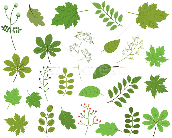 Green leaves vector set on white background, spring foliage Stock photo © Pravokrugulnik