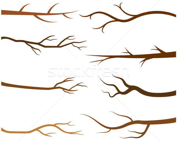 Bare tree  branches Stock photo © Pravokrugulnik