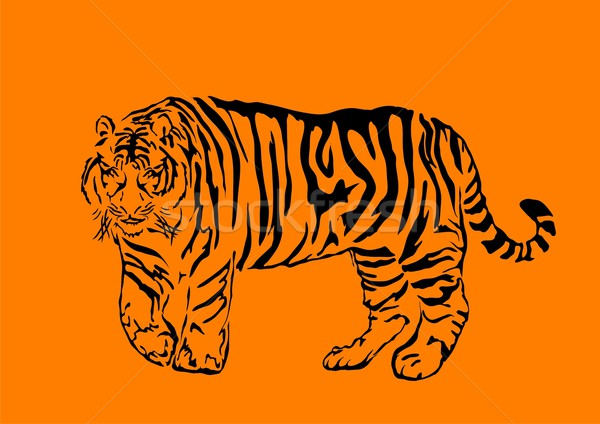 bengal tiger  Stock photo © pressmaster