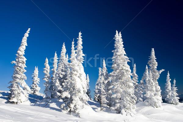 Winter day Stock photo © pressmaster