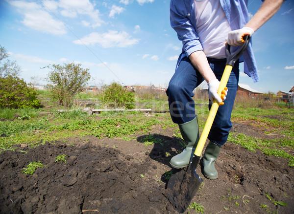 Digging in the garden Stock photo © pressmaster