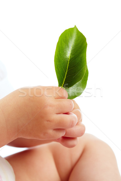 Stock photo: Fragility