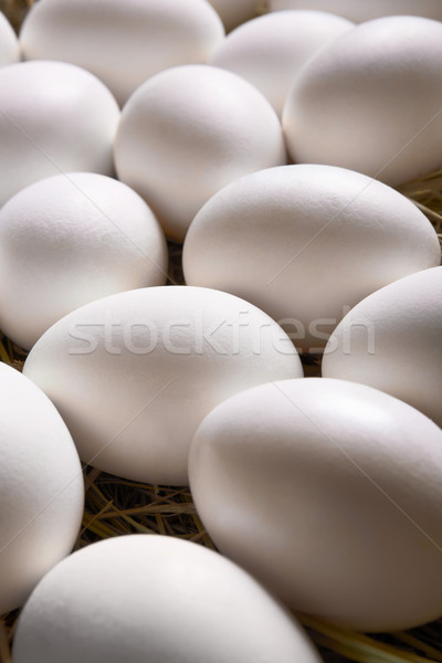 Egg background Stock photo © pressmaster
