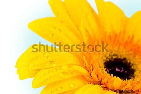 Flowers Stock photo © pressmaster