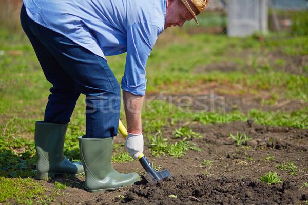 Farmer digging Stock photo © pressmaster