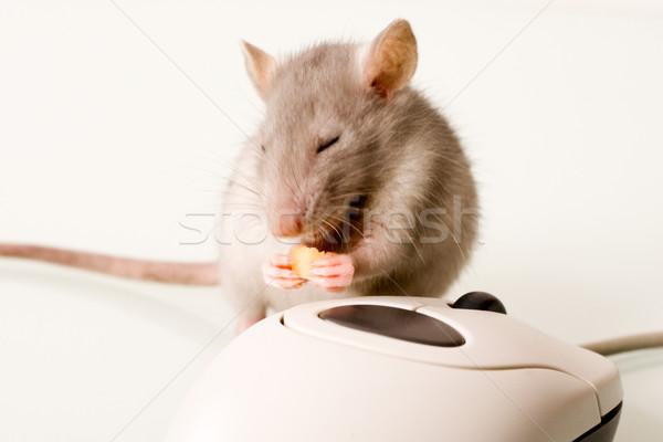 Rágcsáló darab sajt számítógép egér üzlet technológia Stock fotó © pressmaster