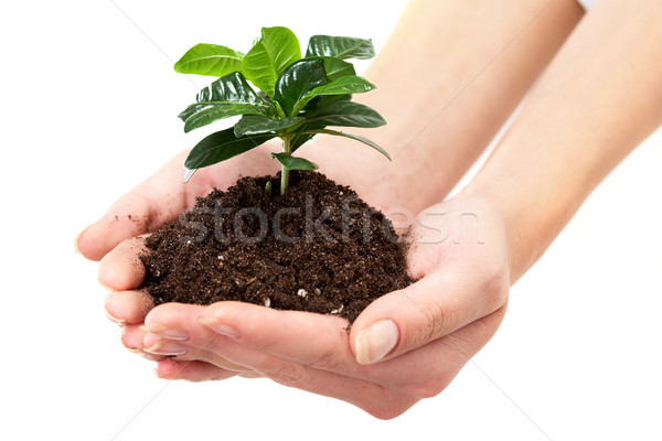 Stock fotó: Növekedés · közelkép · friss · ág · levelek · föld