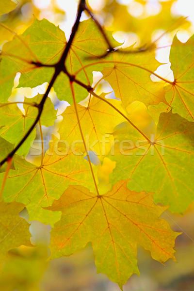 Autumn twig Stock photo © pressmaster