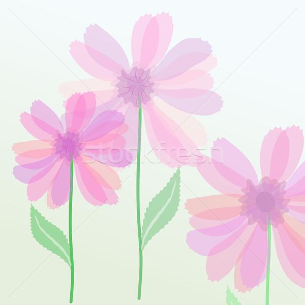商业照片: 紫色 · 花卉 · 透明 · 春天 · 抽象 · 背景