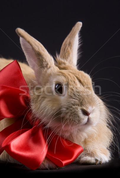 Rabbit with bow Stock photo © pressmaster