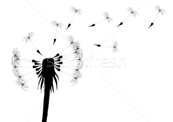 Stock photo: blow-dandelion