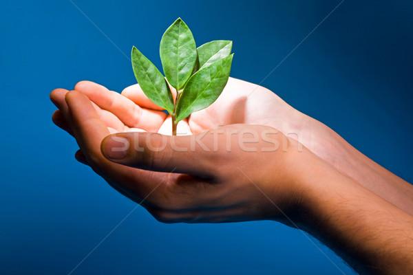 Theme of growth Stock photo © pressmaster
