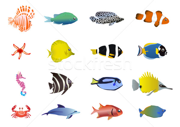 sea-creatures      Stock photo © pressmaster