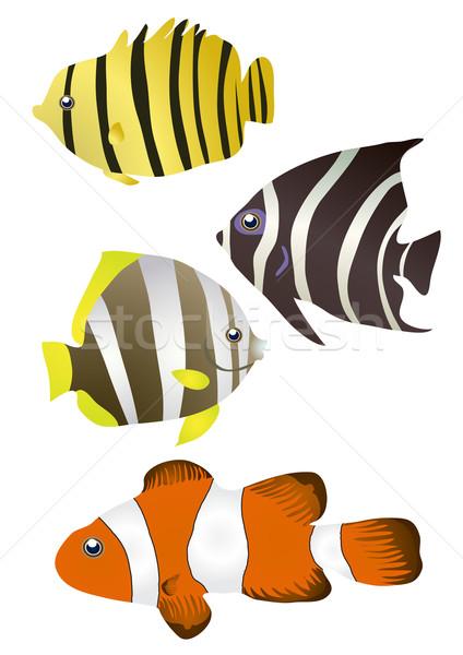 stripy tropical fishes  Stock photo © pressmaster