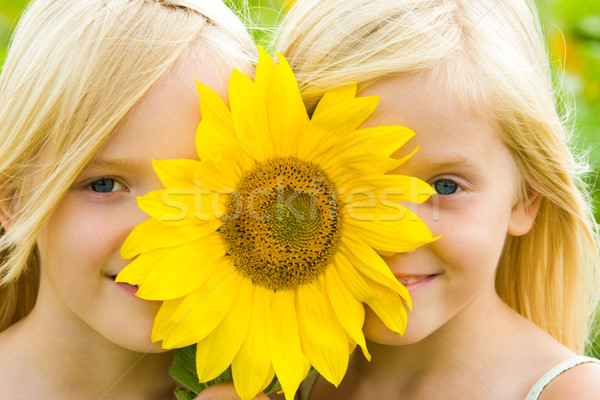 Tournesol enfants joli regarder Photo stock © pressmaster