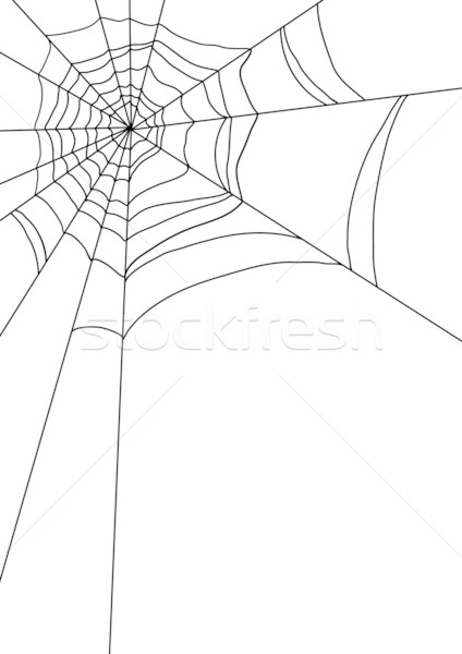 spiders web  Stock photo © pressmaster