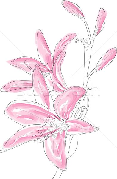 Foto d'archivio: Rosa · giglio · bella · primavera · abstract · sfondo
