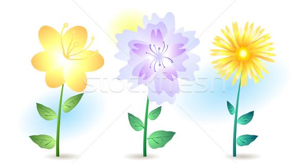summer flowers  Stock photo © pressmaster