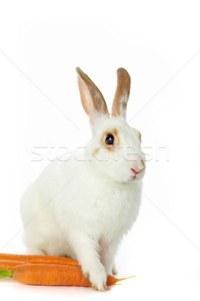 Coniglio carote immagine guardingo coniglio seduta Foto d'archivio © pressmaster