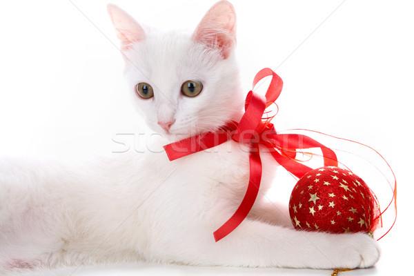 Décoré chaton image blanche chat Photo stock © pressmaster