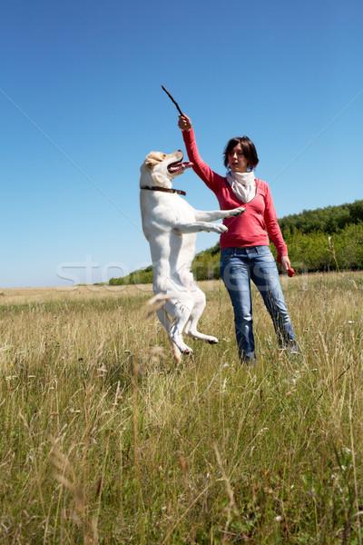 Eğitim yaz köpek evcil hayvan atlamak hayvan Stok fotoğraf © pressmaster