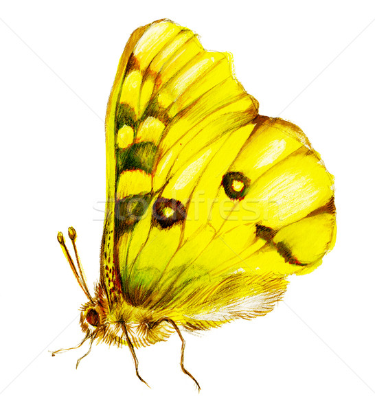Yellow lepidoptera Stock photo © pressmaster