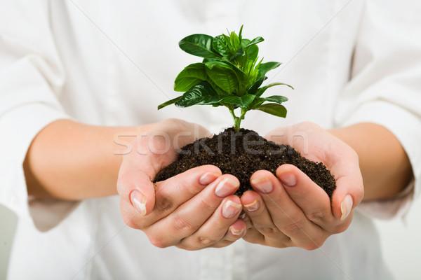 Belo planta retrato verde negócio mão Foto stock © pressmaster