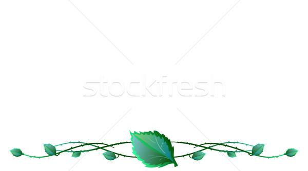листьев колючую проволоку аннотация фон зеленый Живопись Сток-фото © pressmaster