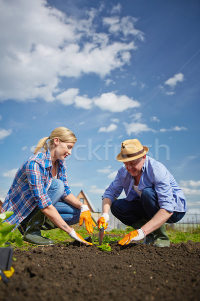 Kiemplant afbeelding paar boeren hemel natuur Stockfoto © pressmaster