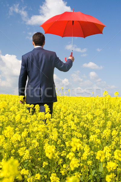 Walk in meadow Stock photo © pressmaster