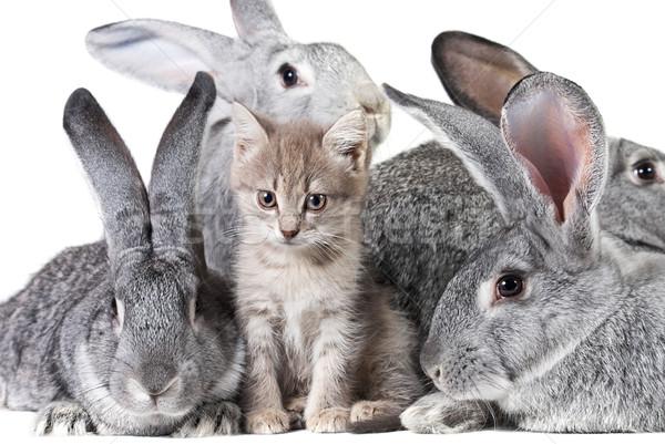 Cute animals Stock photo © pressmaster