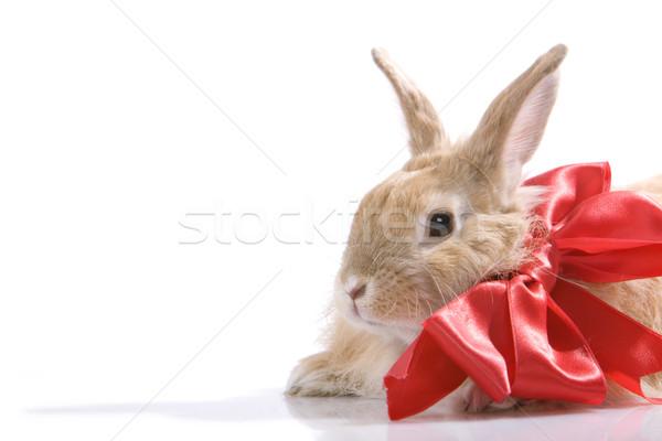 Decorated rabbit Stock photo © pressmaster