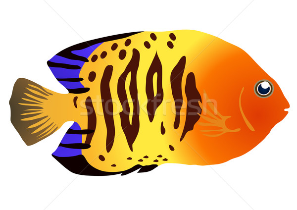 colorful tropical fish  Stock photo © pressmaster