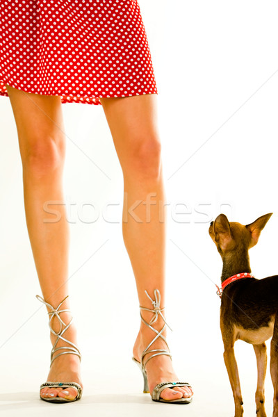 Doggy and its owner Stock photo © pressmaster