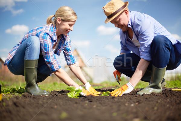 Sämling Pflanzen Bild Paar Himmel Stock foto © pressmaster