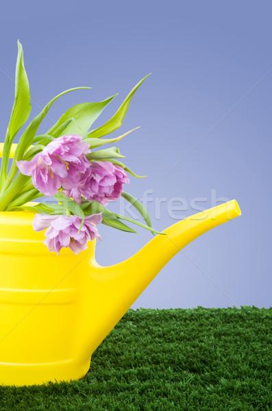 庭園 黄色 新鮮な ピンク 花 ストックフォト © pressmaster